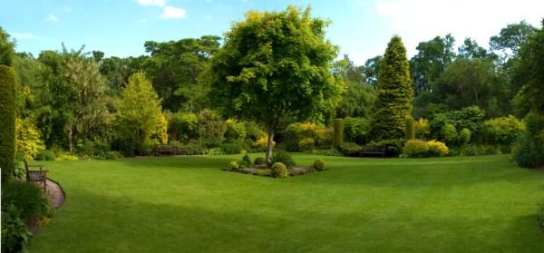 tree work - ramos landscaping