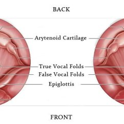 Human Ear Diagram Labeled 2002 Chevy Suburban Stereo Wiring How To Sing On Pitch - Ramsey Voice Studio