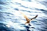 Eagle | Fuerteventura