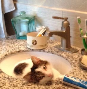 mouse-sink