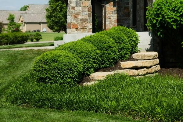 boxwood landscaping ideas randolph
