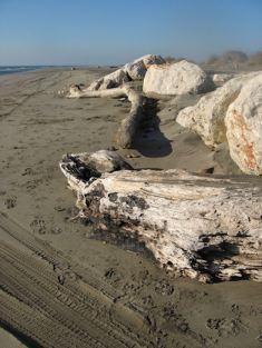 pierre ou arbre sculpté ?