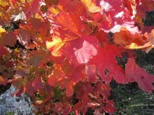 Teintes d'automne au vieux Refortiers