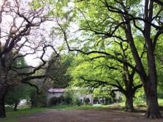 Abbaye ND de Lure