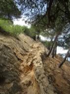 Passage sur aiguilles rocheuses