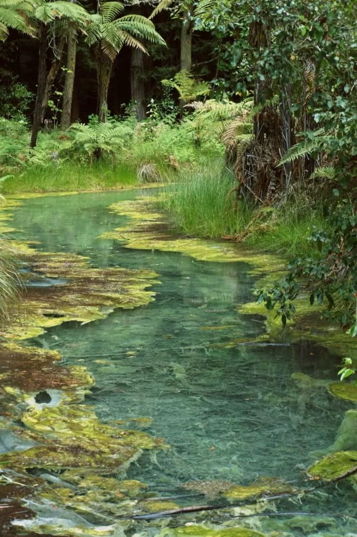 Rotorua - Redwoods - New Zealand