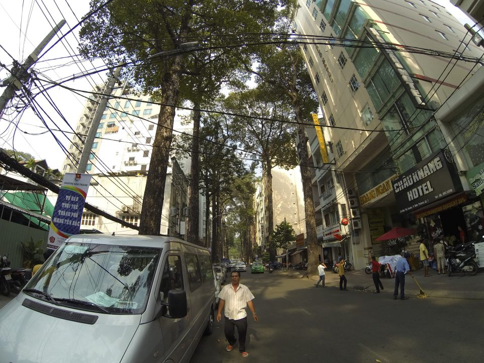 Giant old-growth trees in Ho Chi Minh City, Vietnam