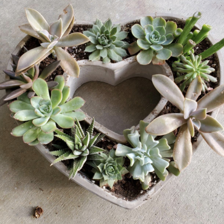 heart shaped planter