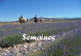 Randonnées à cheval en PROVENCE-SEMAINES