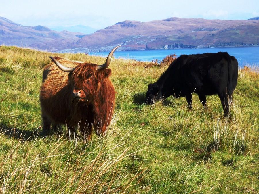 West Highland Way et le de Skye  Sjour de randonne en Ecosse
