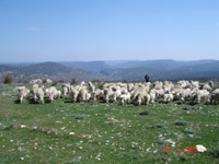 En haut de Zahorejas