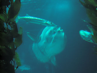 OCEANARIUM POISSONS