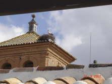 Cigogne sur le clocher