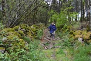 Le chemin coupe à travers bois