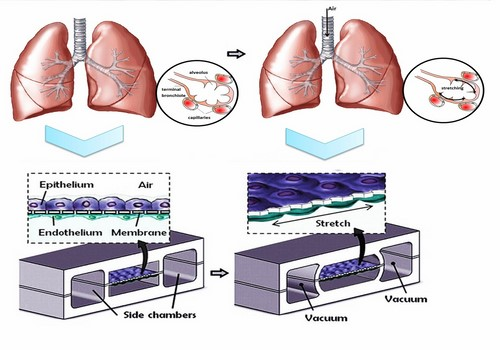 Bio-printed Organs - 3D Printing in Medical Technology