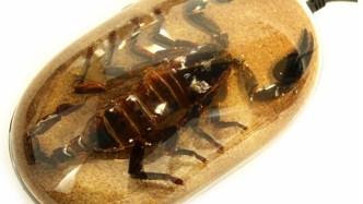 Black Scorpion Computer Mouse