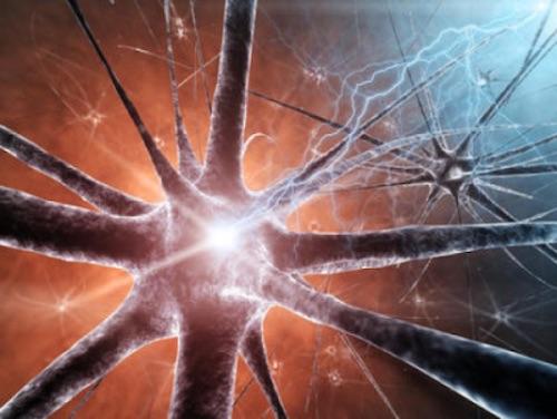 sel otak