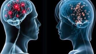 male-female-brain