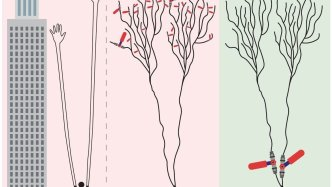 Synaptic and Dendritic learning - Brain Learns Differently -