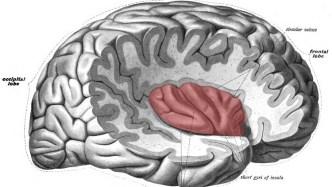 anterior insular cortex regions