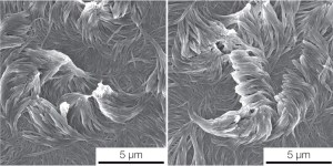 nanofibers for Superpower Coatings