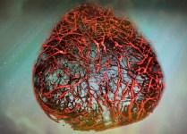 Artificial 3D Human Blood Vessels