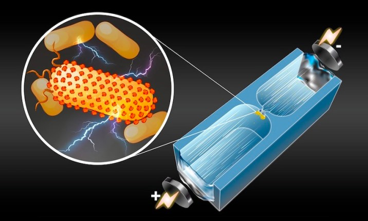 Technique to detect Electricity-Producing Bacteria