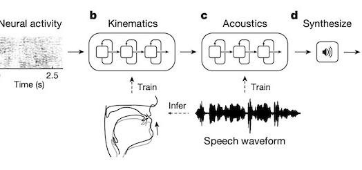 AI generate Speech from neural activity