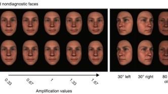 3D Facial Models brain information