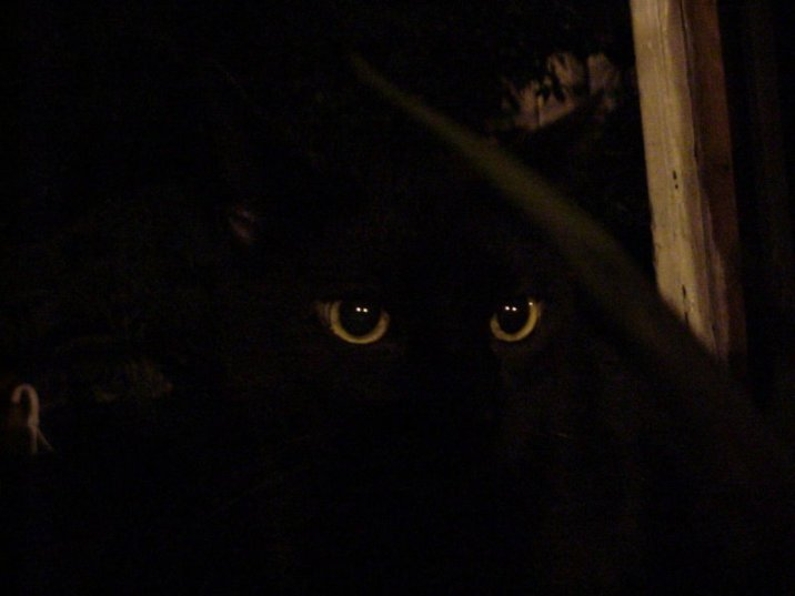 Cat's eyes in dark