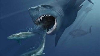 artist's impression of megalodon