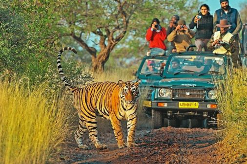 Great News for Tiger Lovers in Unlock 5! Now Tourist Can Visit Ranthambore National Park - Latest News & Blog - Ranthambore National Park
