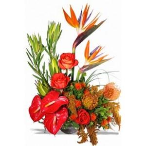 Exotic Flowers