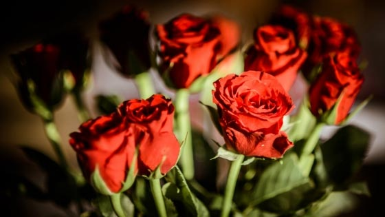 Why Are Roses So Popular for Valentine's Day?