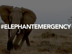#ElephantEmergency. Credit: Juan Pablo Moreiras/FFI