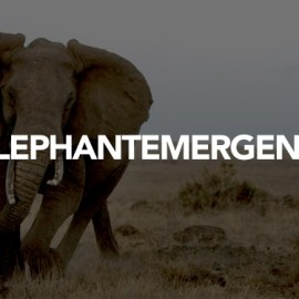 RRF launches an emergency appeal to combat militant elephant poaching in DRC