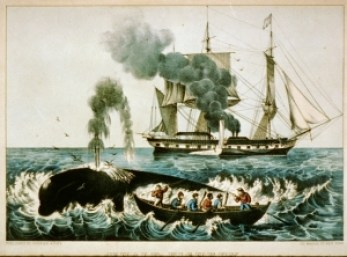 Whaling and span of control