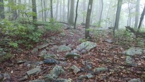 Running 50 Miles - 6 Lessons in Perseverance: Rock Gardens on the Appalachian Trail