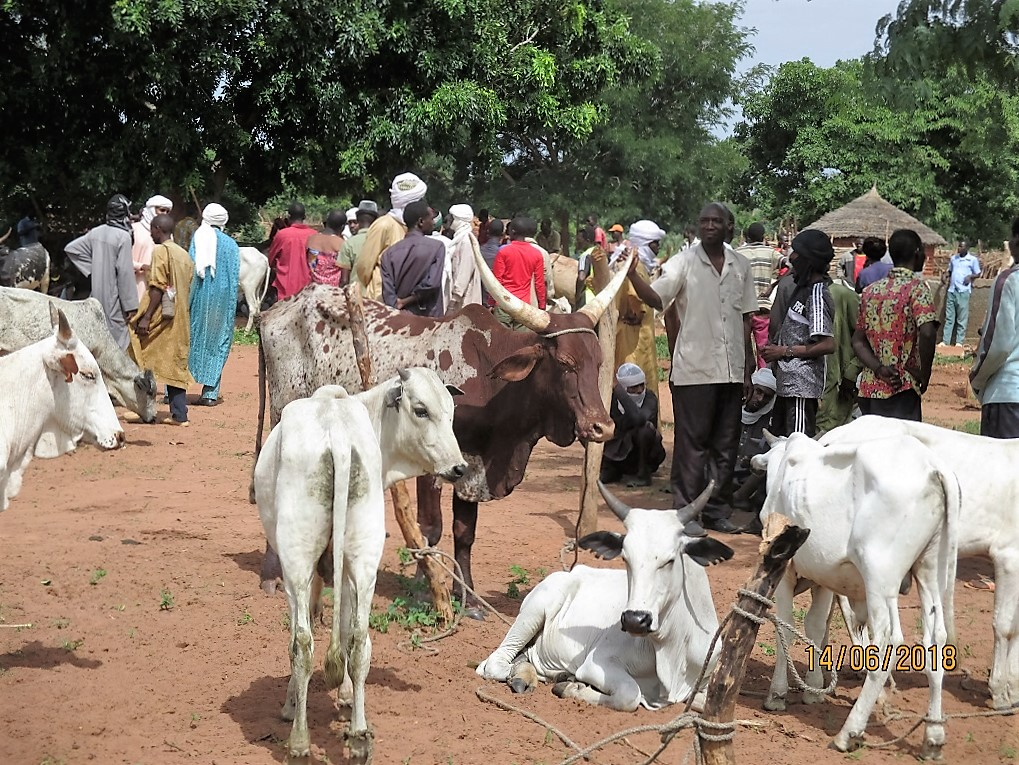 Une vue du marché à bétail de Mouroumgouleye (Chaque jeudi), Mandoul oriental.