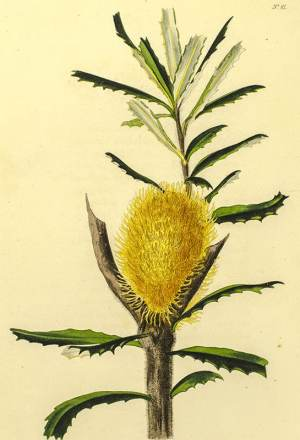 The Botanical Cabinet Consisting of Coloured Delineations of Plants, from all Countries.
