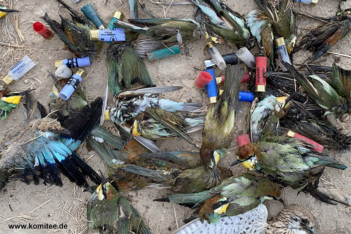 Cypriot police ignore mass killing of protected birds