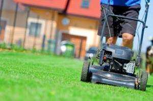 nái cỏ - Việc cắt cỏ đầu tiên với máy cắt cỏ