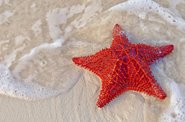 Home decor Bahama Starfish on the beach