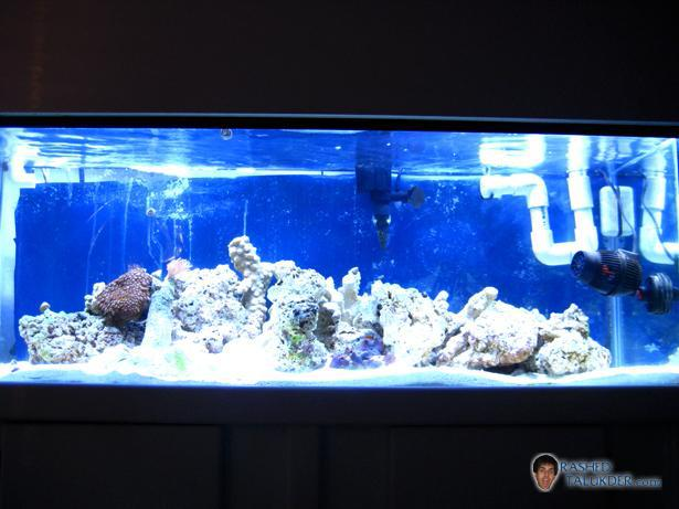 My saltwater tank after 1 month