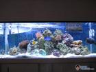 4 months of saltwater reef keeping