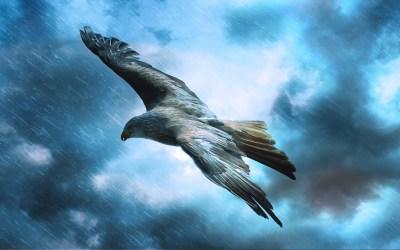 lietať ako orol