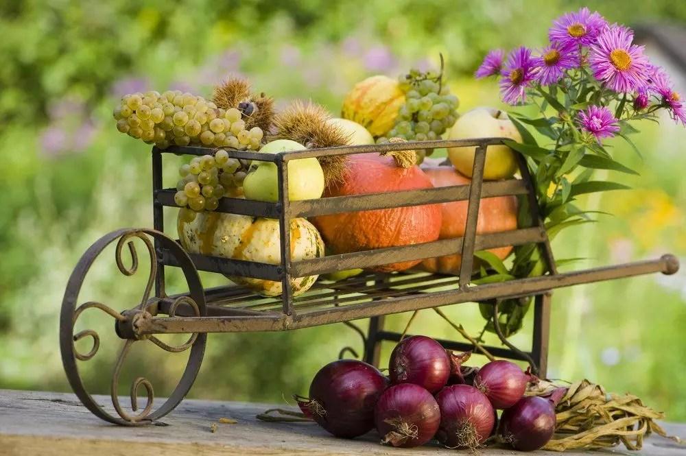 Herbstdekoration  Ratgeber Haus  Garten