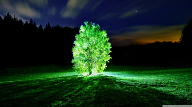 GlowingTreeWallpaper