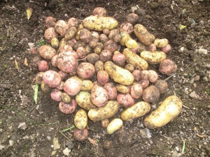 potatotes
