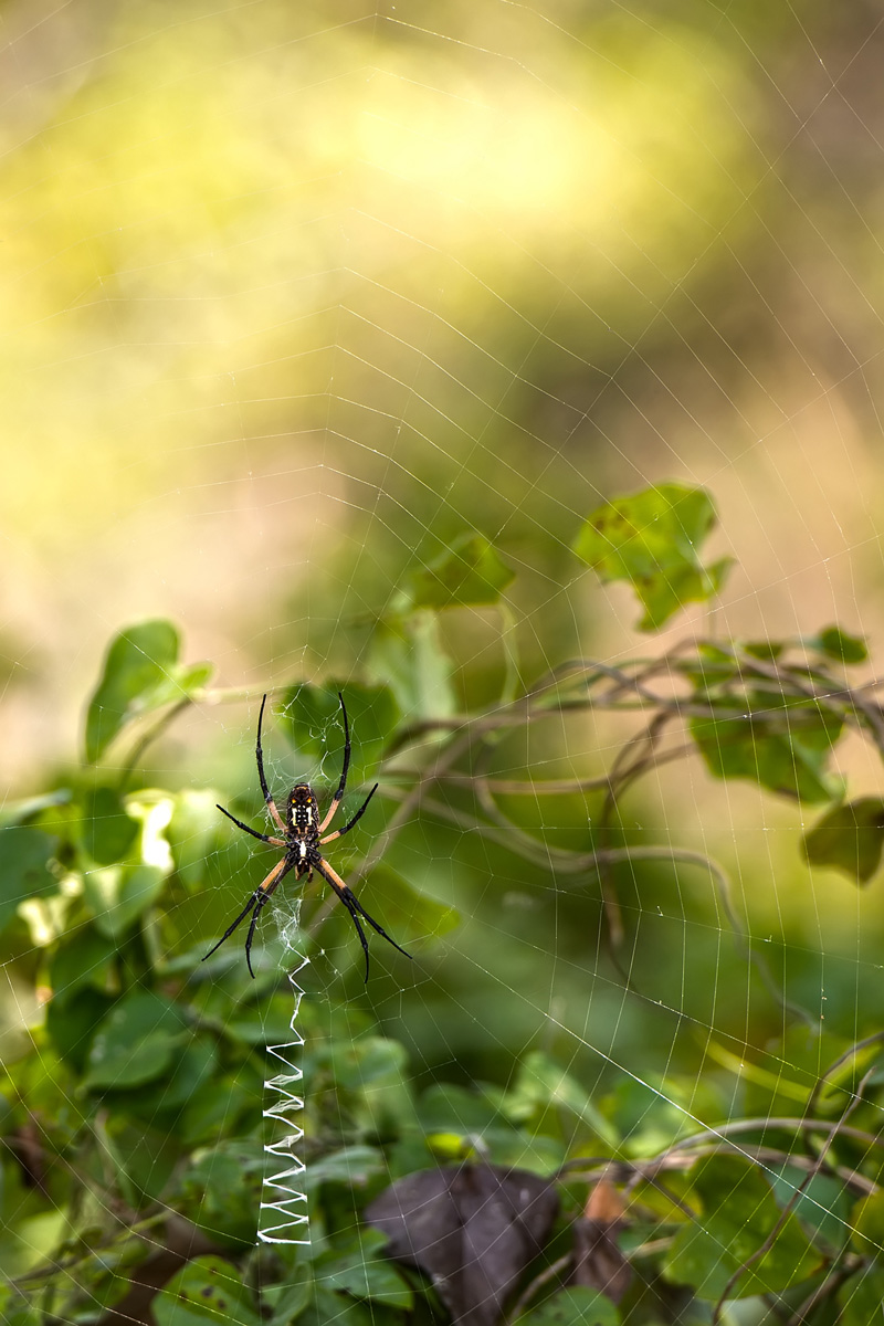 Spider by Judy Keown